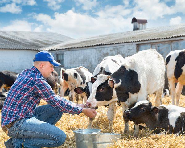 master-en-nutricion-y-dietetica-veterinaria-master-en-homeopatia-veterinaria